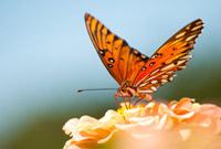Transform your life!